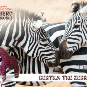Bertha the Zebra