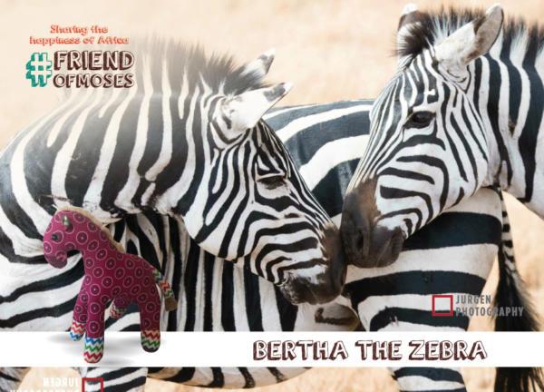 Bertha the Zebra